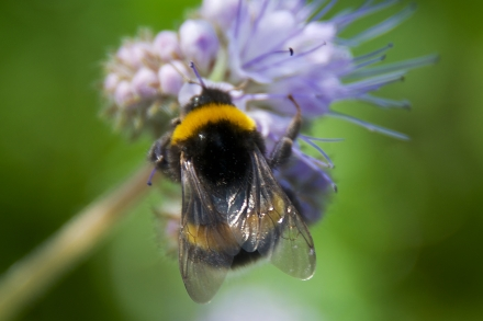 Bijenproject_KH_©Chris Vyaene
