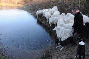 schapen zwinmonding (2)
